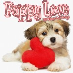 Puppy Love 100 Classic Songs